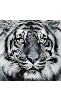 Cuadro Cristal Tigre 80x80 cm