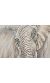 Cuadro Elefante Pintado