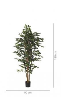 Árbol FICUS NITIDA 1.80 cms