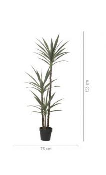 Planta YUCA 155 cms